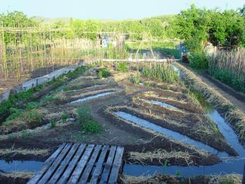 Kitchen garden, May 2006