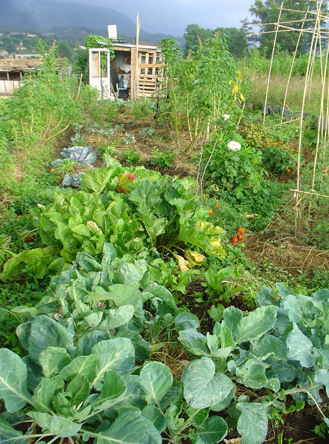 Debra Solomon's Occitanian kitchen garden