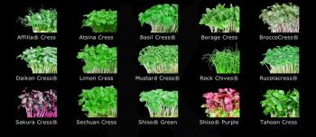 the Koppert Cress selection