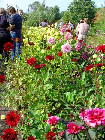 The guests sip wine amidst Ar's dahlias