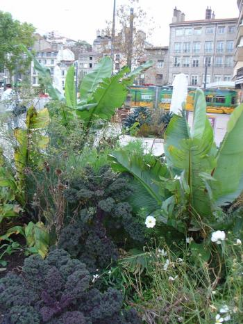 urban agriculture in Saint-Etienne