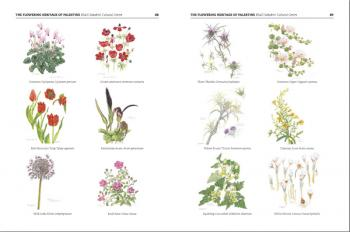 The flowering heritage of Palestine, herbarium courtesy of the Khalil Sakakini Cultural Centre, from the Subjective Atlas of Palestine, by Annelys de Vet