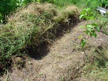 Harvesting the alfalfa hay roll for mulch, Debra Solomon, culiblog.org