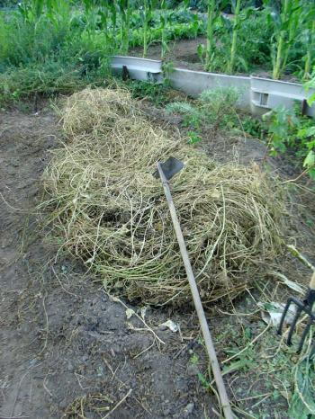 I harvest hay and my neighbour harvests vegetables, Debra Solomon, culiblog.org