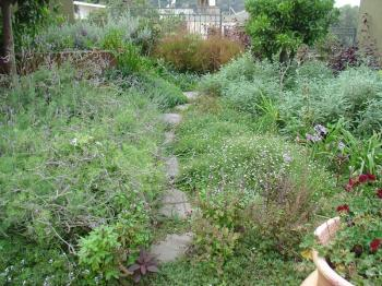 The herb garden at Al Beet in Ayn Hawd, Debra Solomon / culiblog.org