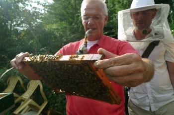 Beekeeper smokes and searches for the Queen, Debra Solomon, culiblog.org