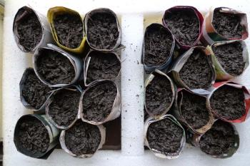 Seedling pots made with paper from junk mail, Debra Solomon, culiblog.org